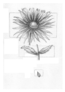 black and white flower and seed